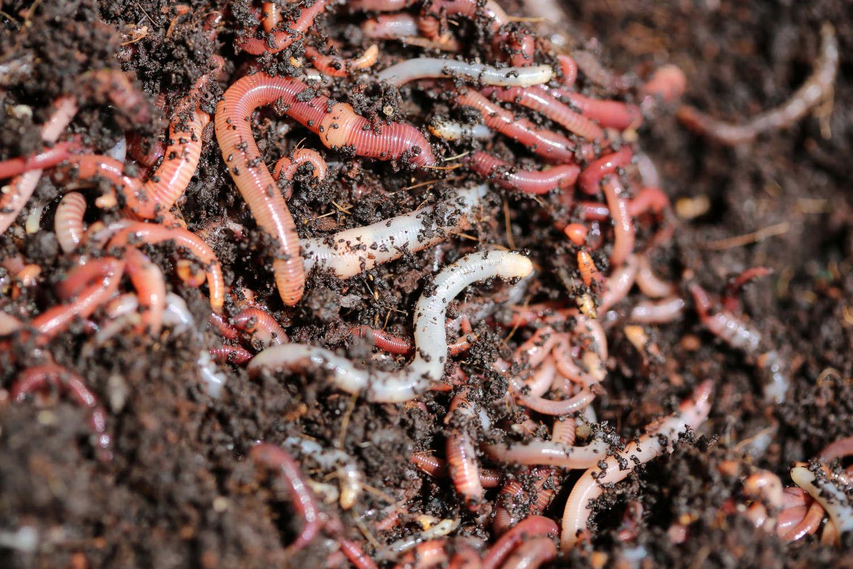 wurmkompostierung
