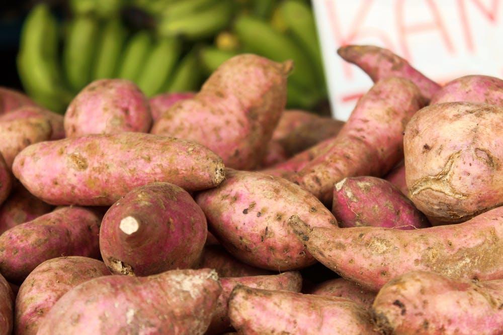 Süßkartoffel Anbau